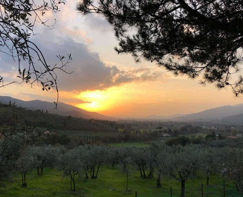 夕焼けのオリーヴ畑、サント・ステファノ