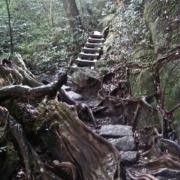 縄文杉へ、屋久島