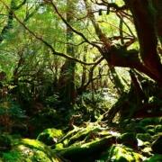 白谷雲水峡、屋久島