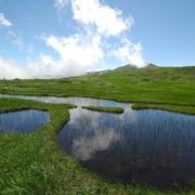 月山 弥陀ヶ原湿原