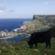 赤尾展望所からの眺め_西ノ島町_隠岐の島