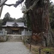 玉若酢神社(八百杉)_隠岐の島
