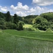 綺麗な田んぼの中を歩いてゆきます