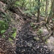 雑木林内の道は少しぬかるんでいるところもありました
