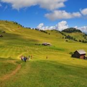 マルガ・ヴァラキア手前の牧草地